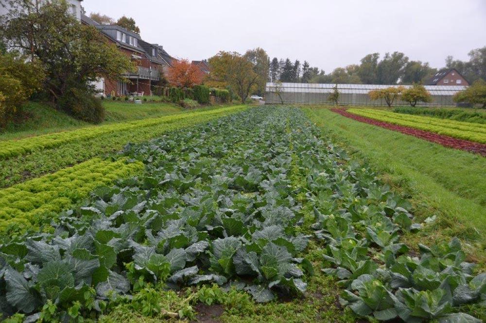 Elbtopf-Gemüseanbau