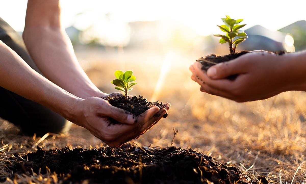 Elbtopf Nachhaltigkeit Baum pflanzen